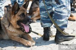 Идут обыски. Жителей Челябинска напугали люди в погонах и с собаками