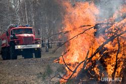 Жителям Сургута запрещают ездить в лес. Боятся повторения ямальской истории