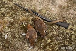 На Ямале из-за сибирской язвы изменили правила охоты