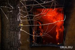 Кошки и собаки погибли в огне. В Шадринске сгорел еще один приют для животных. ФОТО