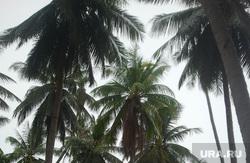 клипарт, тропики, пальмы