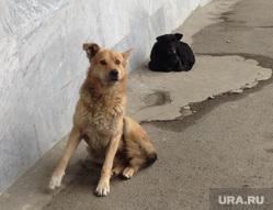 Долгострой на Васенко. Бродячие собаки. Челябинск., бродячие собаки