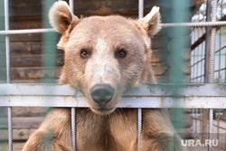 Медведь. Челябинск., медведь есть чо